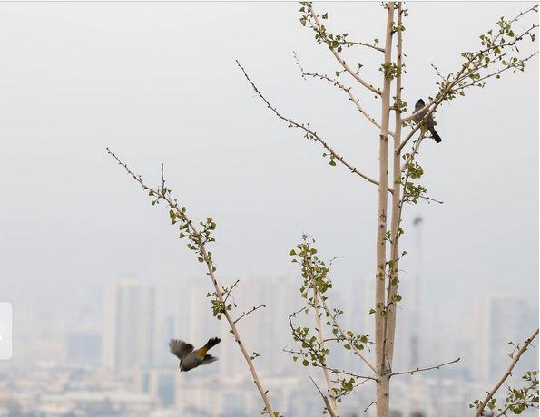کیفیت هوای تهران همچنان در وضعیت قرمز است